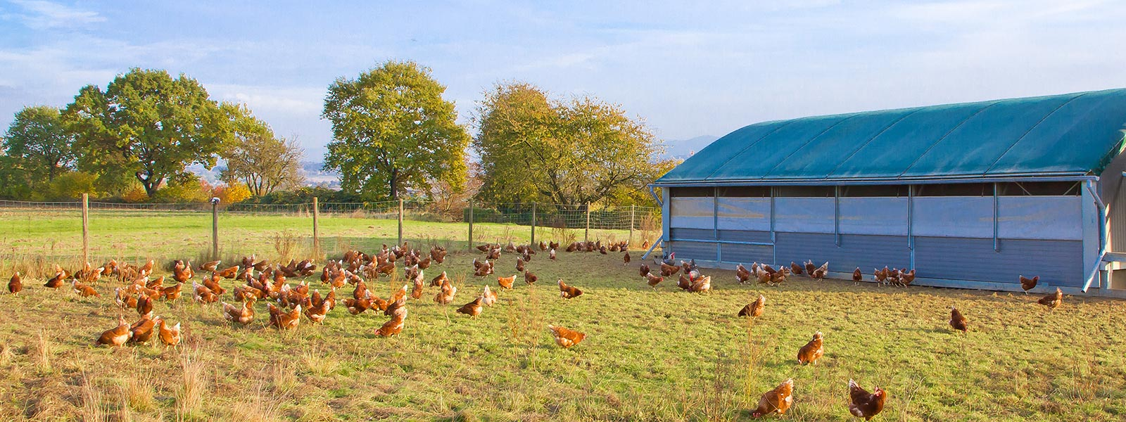 Haltung und Fütterung von Hühnern