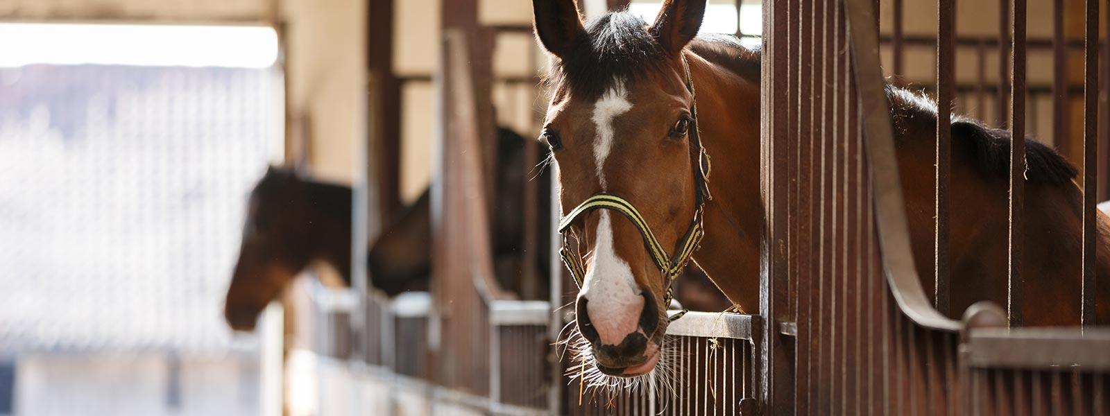 Stallung für Pferde mit Kiefl Stalltechnik in Rain